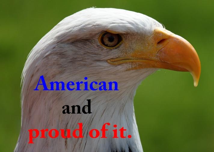 (A)PIC18bald-eagle-portrait-white-tailed-eagle-adler-38998RLWhiteSayings