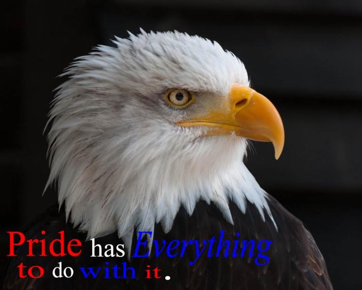 (A)PIC35bald-eagles-bald-eagle-bird-of-prey-adler-53581RLWhiteSayings